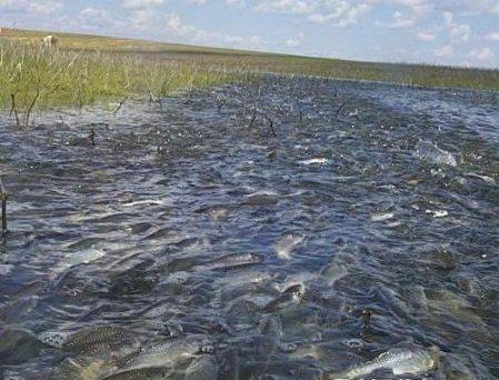 Как ловить рыбу весной