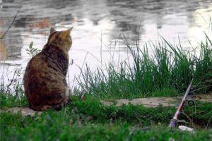 Ловля хищной рыбы весной