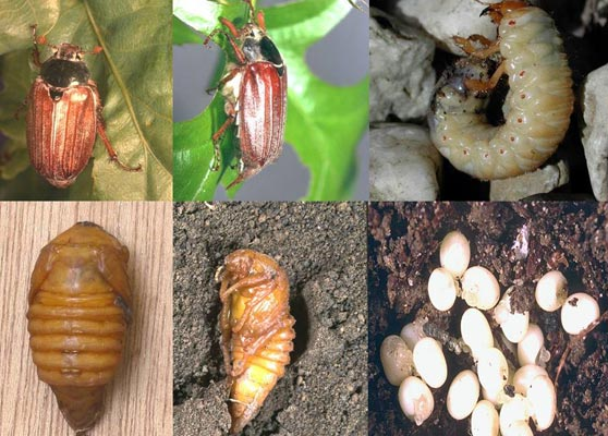 Ловля голавля на майского жука со дна