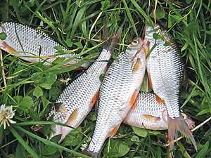 какая рыба клюет в дождь и грозу