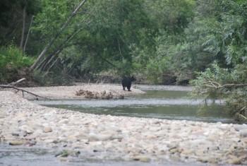 Где искать рыбу в реках
