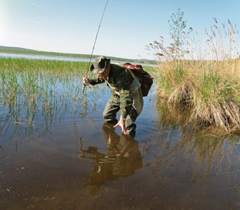 прикормка рыбы при ловле сетями