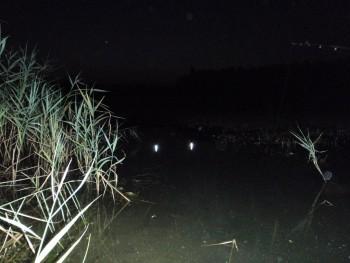 ловля ночью