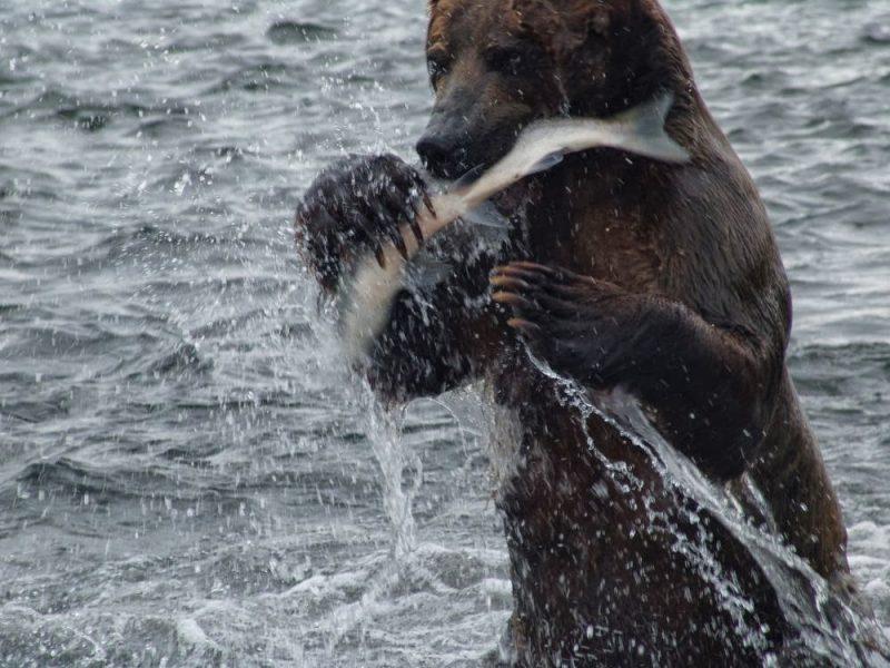 прикормки для рыбалки своими руками видео
