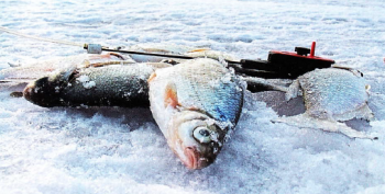 Рыбалка на Береславке