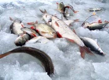 Ловля по последнему льду на небольших водоемах