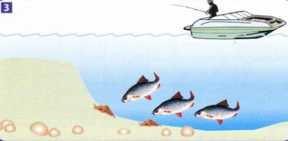 Ловля плотвы в озере