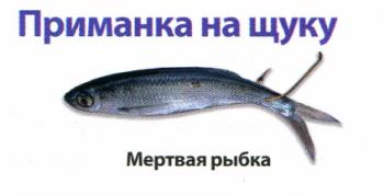 Как ловить щуку на мертвую рыбку