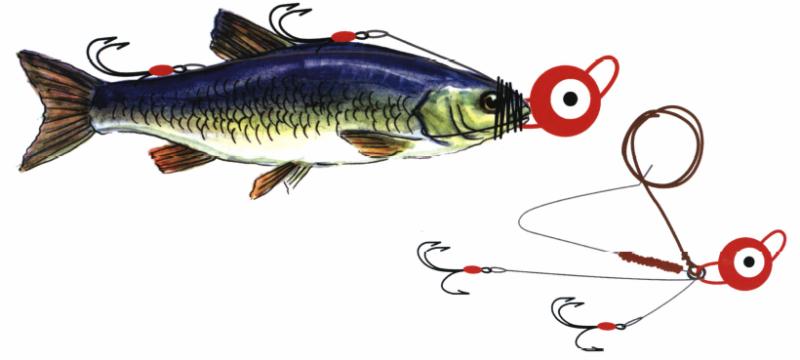 Ловля на мертвую рыбку