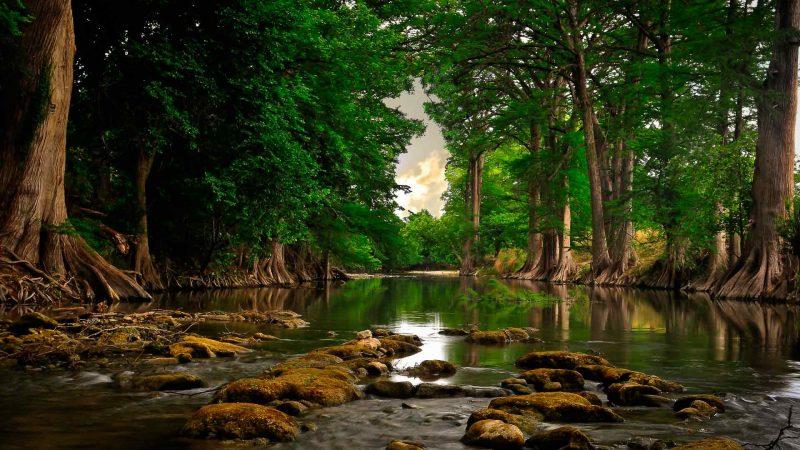 Роль древесной массы в водной экосистеме