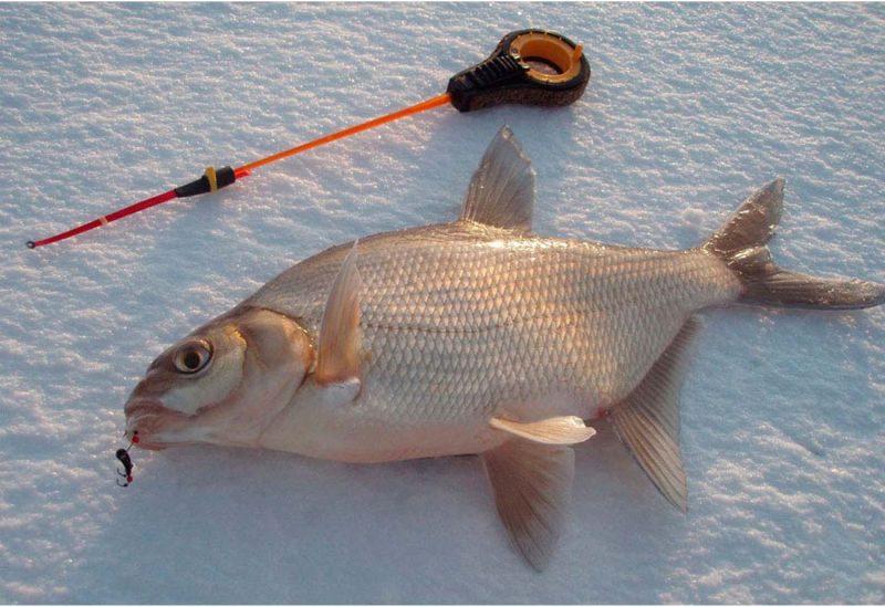 Ловля из-подо льда на течении