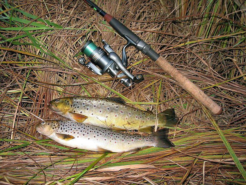 Выбор спиннингового удилища для ловли форели