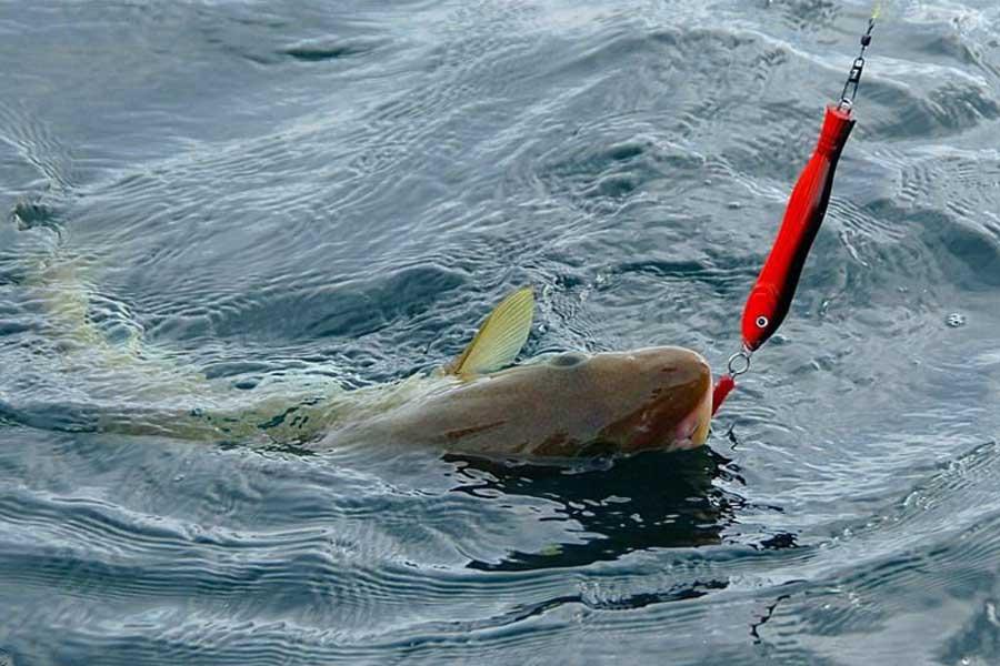 Морская рыбалка. Пилькеры