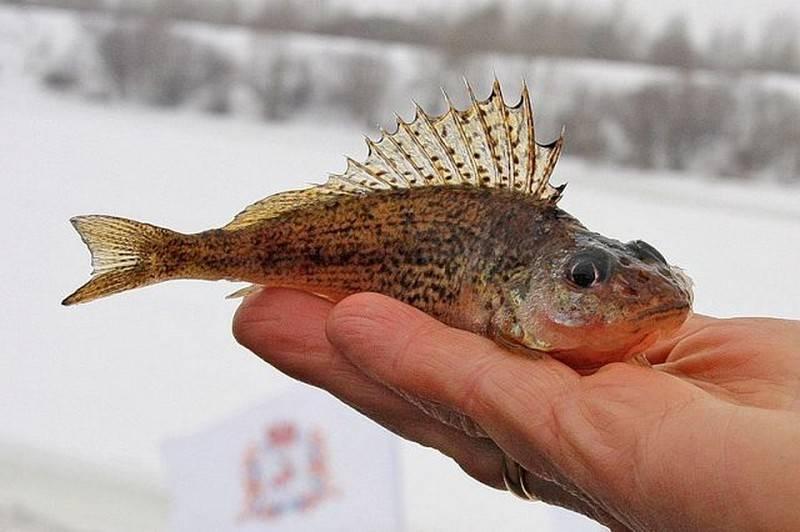 Секрет рыболова. Достал ёрш – поднимай приманку