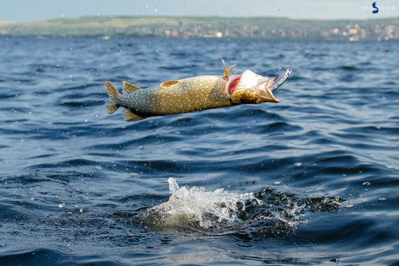 Как правильно подсекать и вываживать рыбу