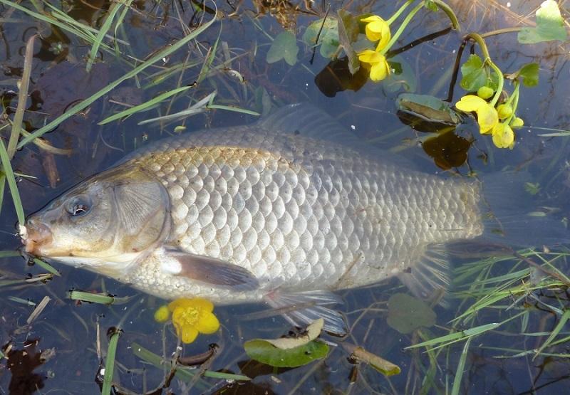 Мормышка в летнее время года в стоячей воде