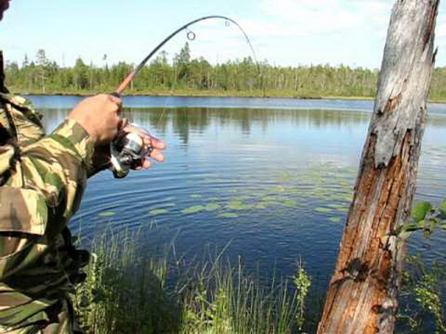 Простое решение сложной проблемы: ловим спиннингом в зарослях травы