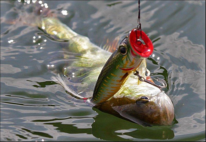На окуня с поппером: секреты для успешной рыбалки