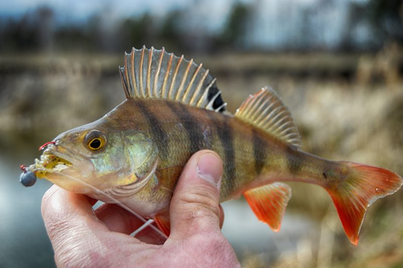 где клюет рыба в челябинской области 2017