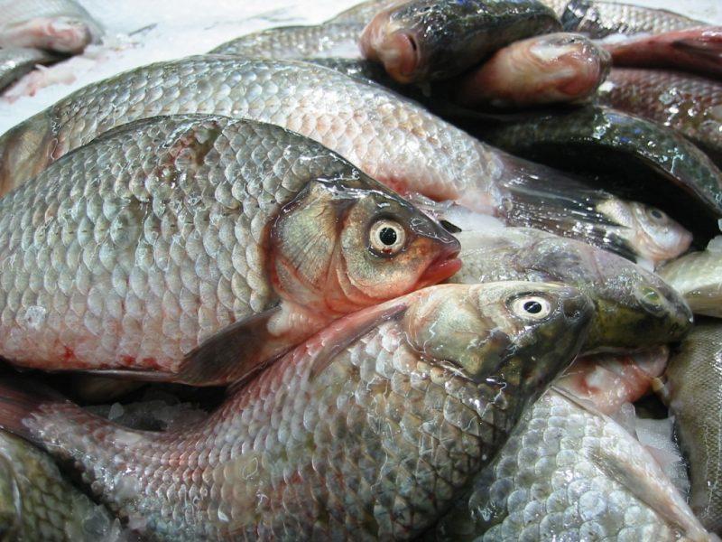 Как определить свежая рыба или нет?