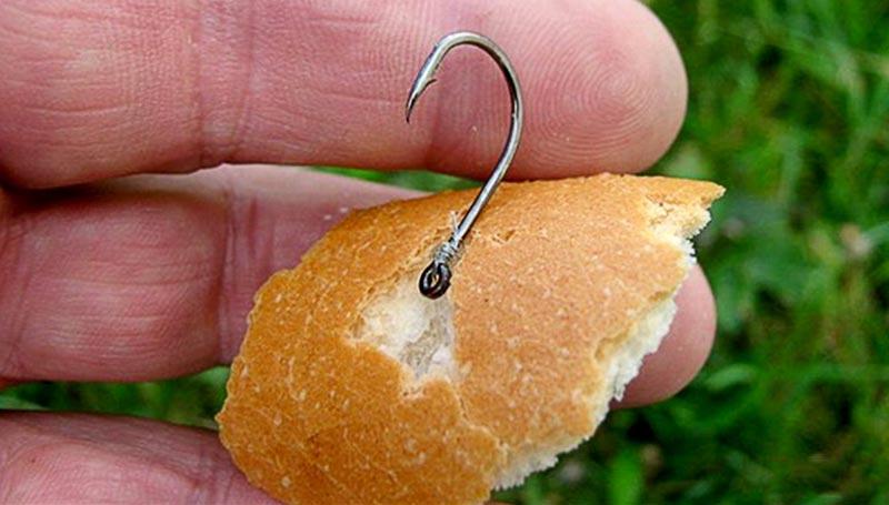 Ловим рыбу на хлебные насадки и бутерброды