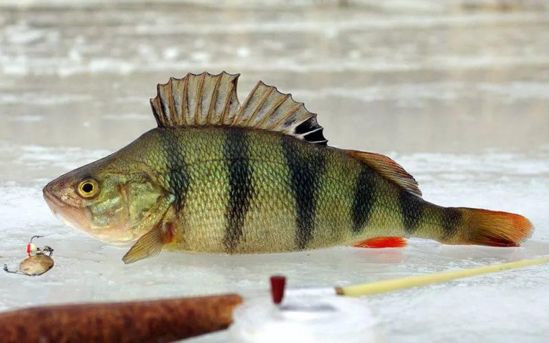 Ловля рыбы по перволедью. Тонкости и нюансы
