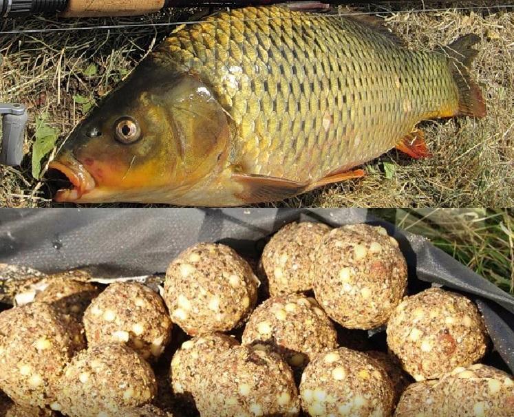 Рабочий рецепт каши для ловли карпа и сазана