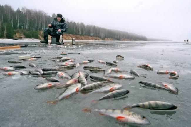 Госдума приняла новый закон о любительской рыбалке