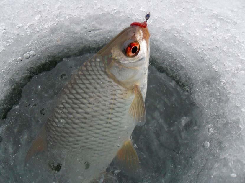 Зимняя рыбалка. Ловля на мормышку