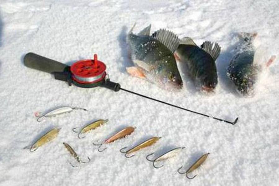 Особенности ловли окуня на вертикалку в конце зимы