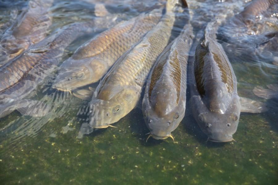 Индивидуализм у рыб
