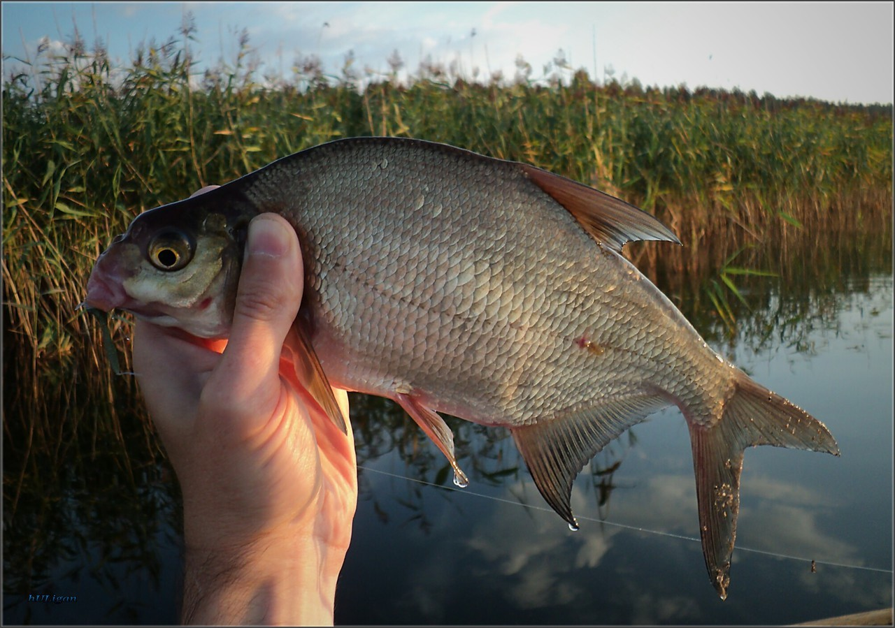 При какой погоде рыба будет сама кидаться на крючок с приманкой?