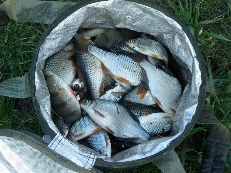 Особенности весенней ловли белой рыбы