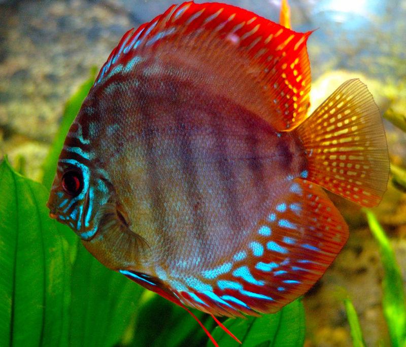 Самые красивые виды рыб в мире: как выглядят и где обитают