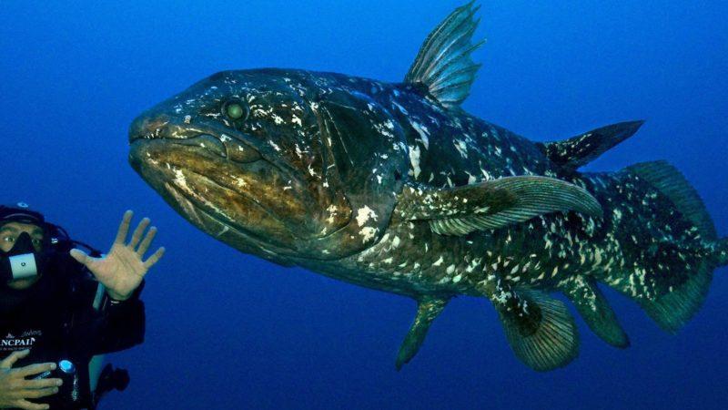 Такого про рыбу вы еще не знаете: некоторые факты которые поражают