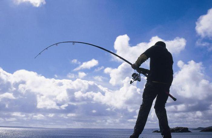 Выбираем спиннинг для морской рыбалки