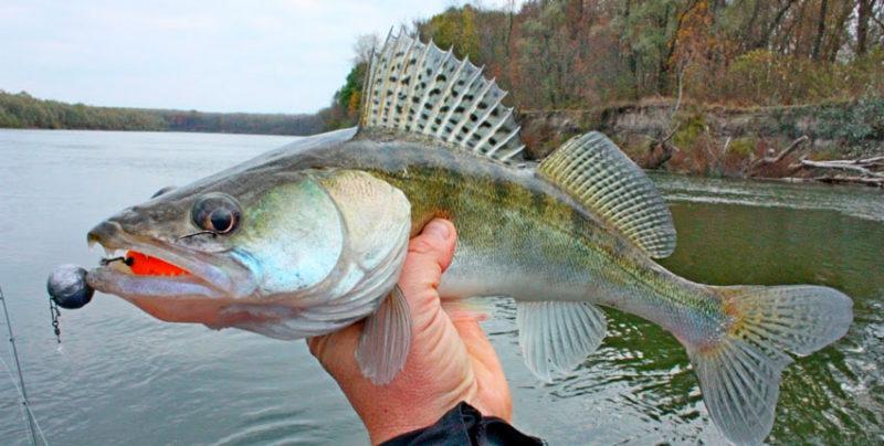 Особенности ловли судака летом на реке
