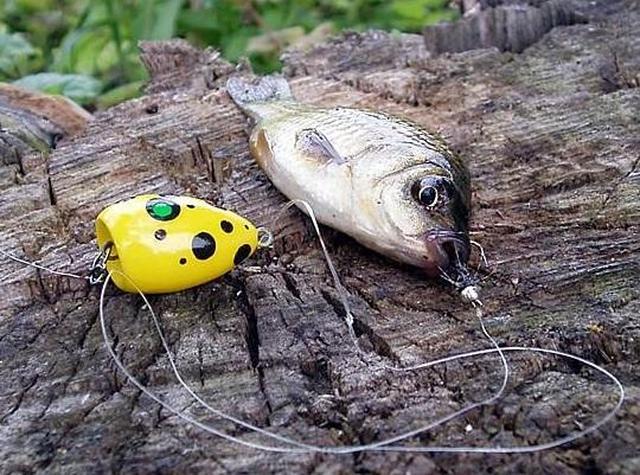 Как ловить на попла-поппер?