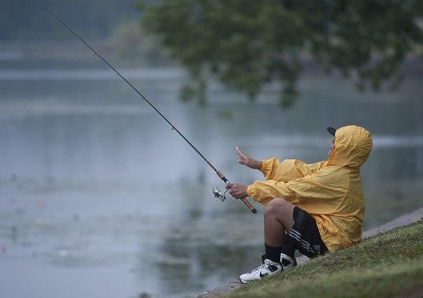 Как температура окружающей среды влияет на поведение рыб