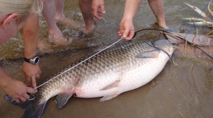 Размер рыбы, разрешенной к вылову: соблюдаем правила рыболовства