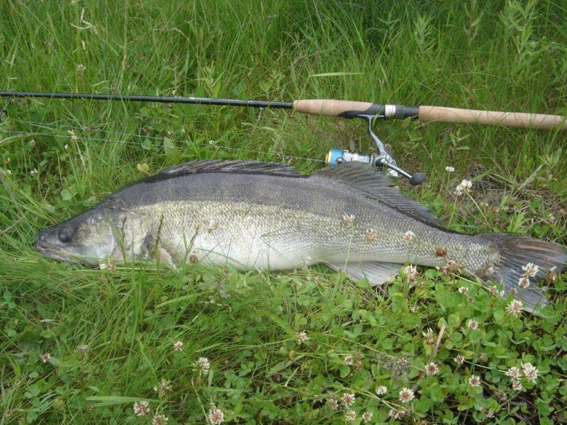 Особенности летней рыбалки на судака