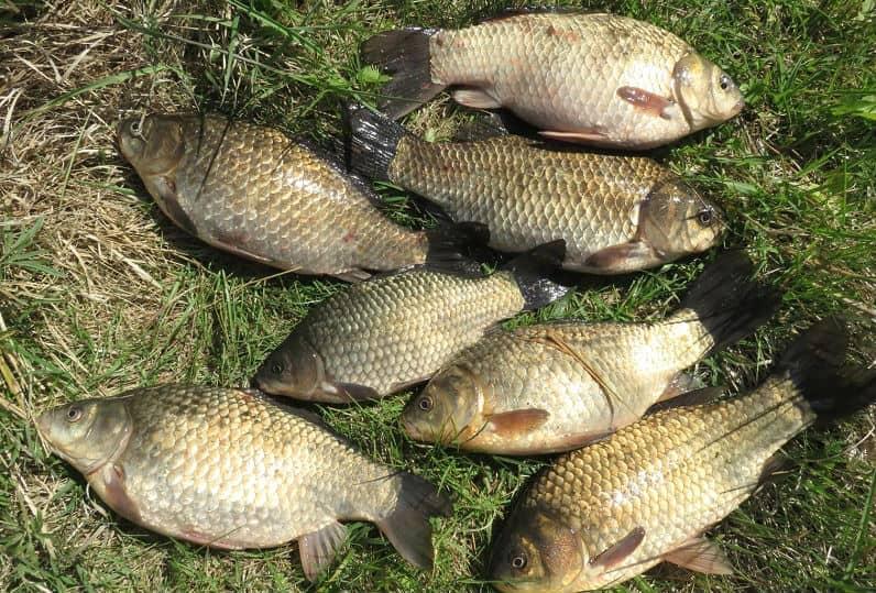 Осенняя рыбалка. На что клюет карась