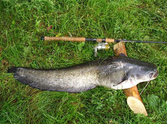 Техника ловли сома: 6 советов, которые помогут стать успешным рыболовом