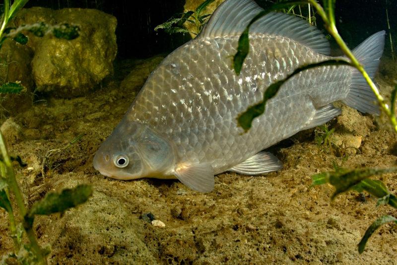 Реакция рыб на запахи