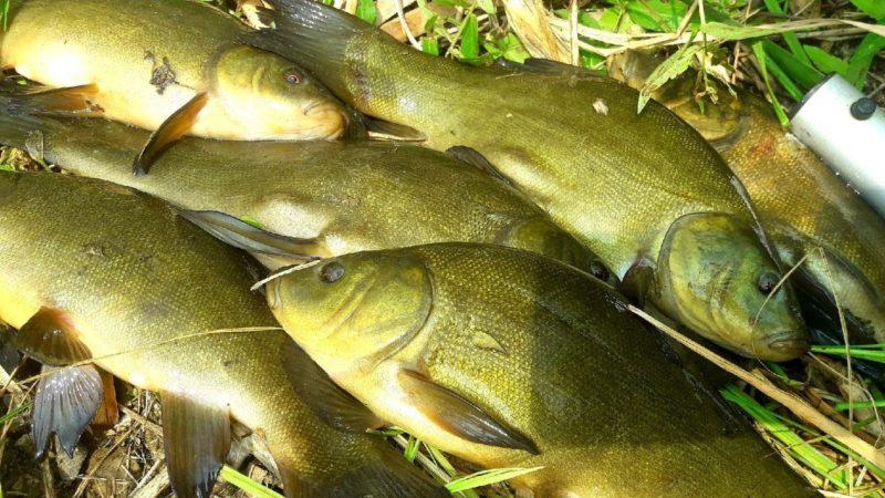 Осенняя рыбалка. Ловим крупного линя