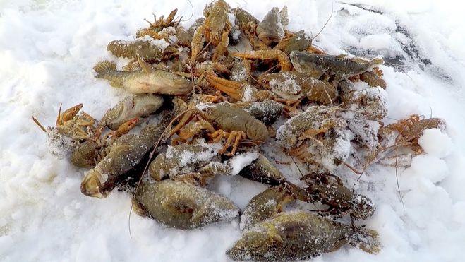 Ловля раков зимой