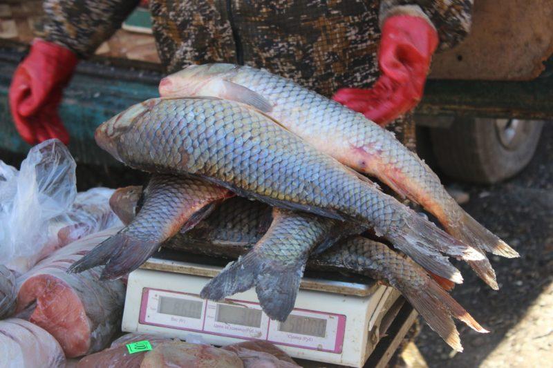 Рыбалка как способ заработка