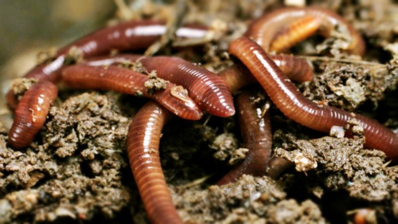 Советы по улучшению клева на червя