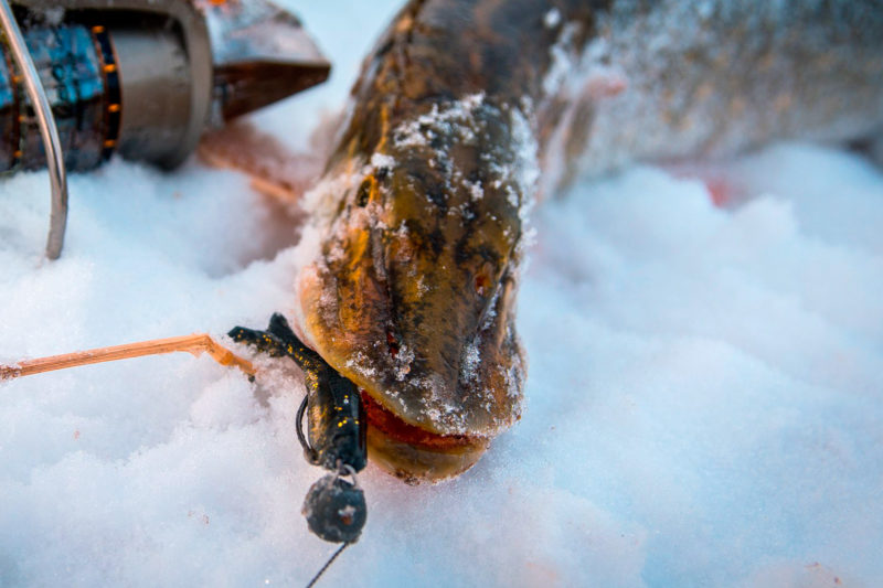 Ловля на резину зимой