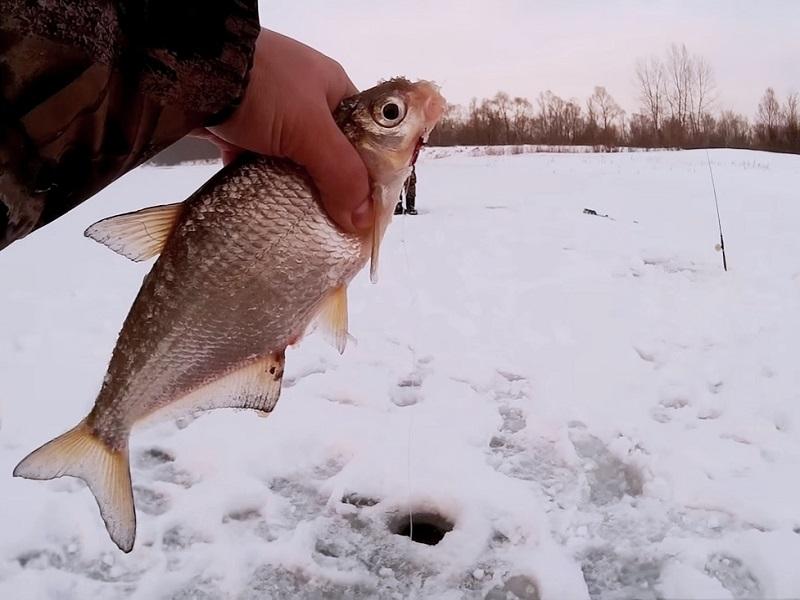 Тандем из мормышек и нюансы поиска белой рыбы
